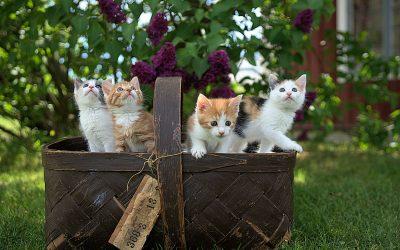 Un corso di comunicazione, se non siamo quattro gatti